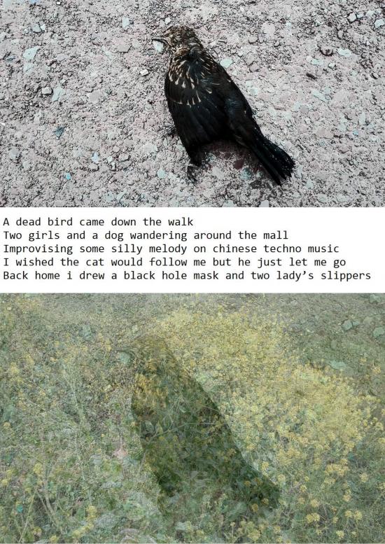 a_dead_bird.png